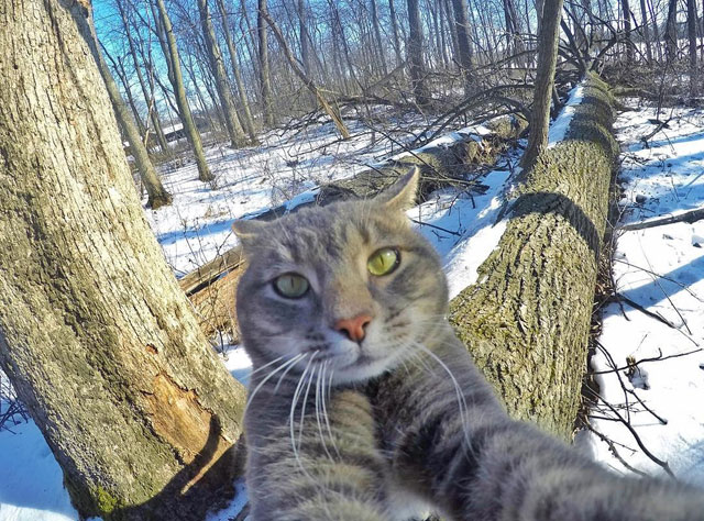 manny the cat takes better selfies than you (14)