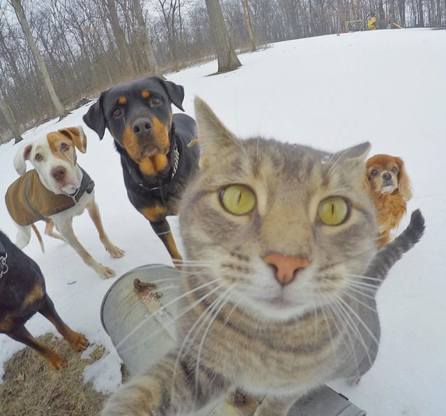 manny the cat takes better selfies than you (16)