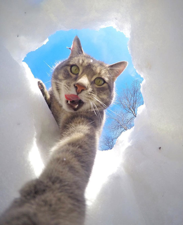 manny the cat takes better selfies than you (2)