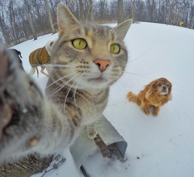 manny the cat takes better selfies than you (4)