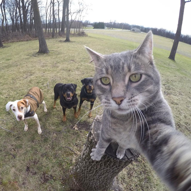 manny the cat takes better selfies than you (5)