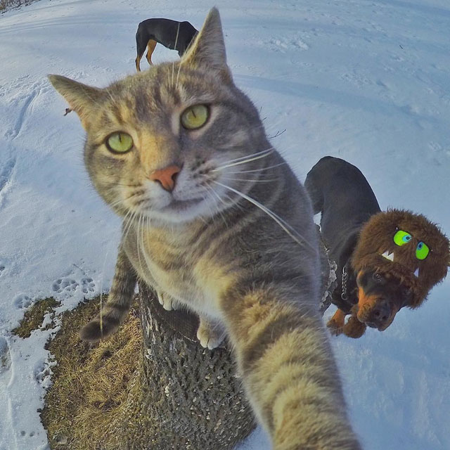 manny the cat takes better selfies than you (8)