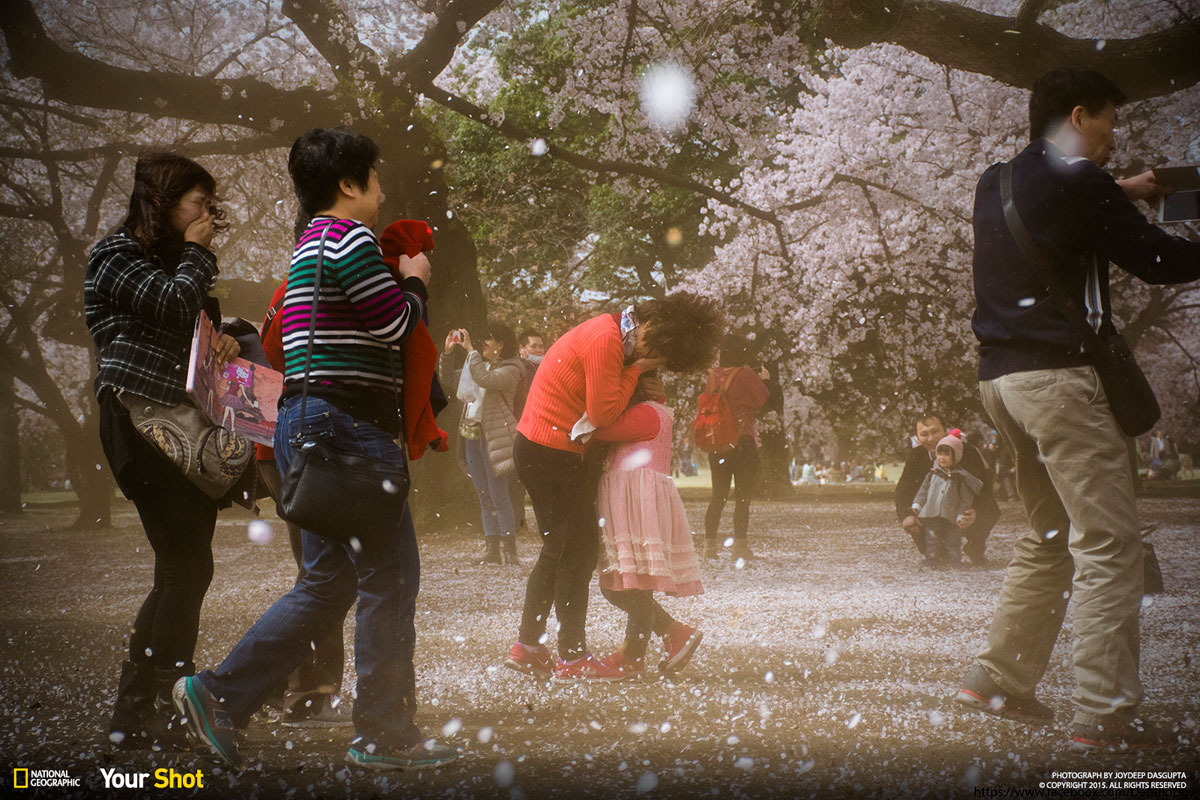 08 Spring Has Sprung! And In Japan, That Means Cherry Blossoms (8 photos)