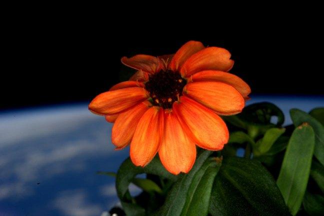 mejores fotografías de año en el espacio de la NASA Scott Kelly (32)