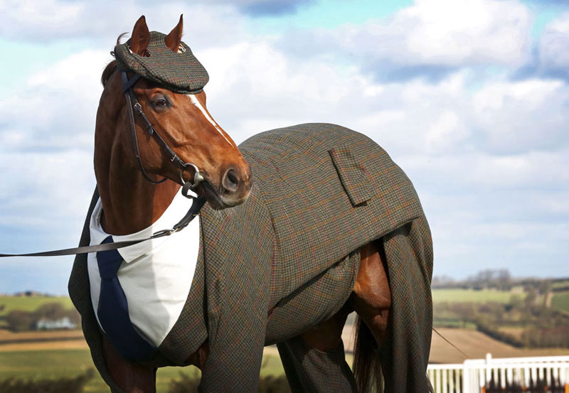 Horse in a Tweed Suit Looking Absolutely Dapper (1)