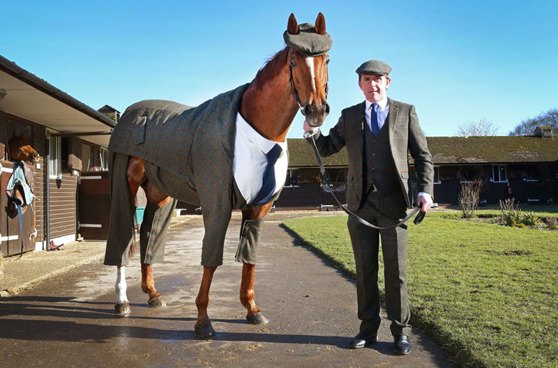 Horse in a Tweed Suit Looking Absolutely Dapper (4)