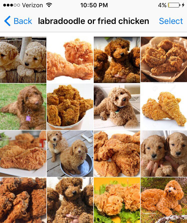 labradoodle or fried chicken by karen zack