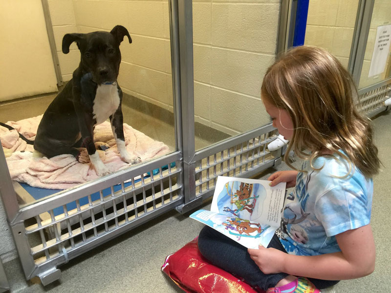 New Program Lets Kids Practice Reading While Shy Shelter Dogs Learn to Socialize (1)