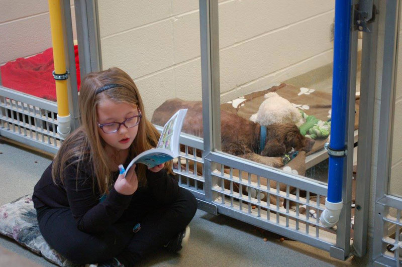 New Program Lets Kids Practice Reading While Shy Shelter Dogs Learn to Socialize (10)