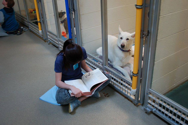 New Program Lets Kids Practice Reading While Shy Shelter Dogs Learn to Socialize (3)