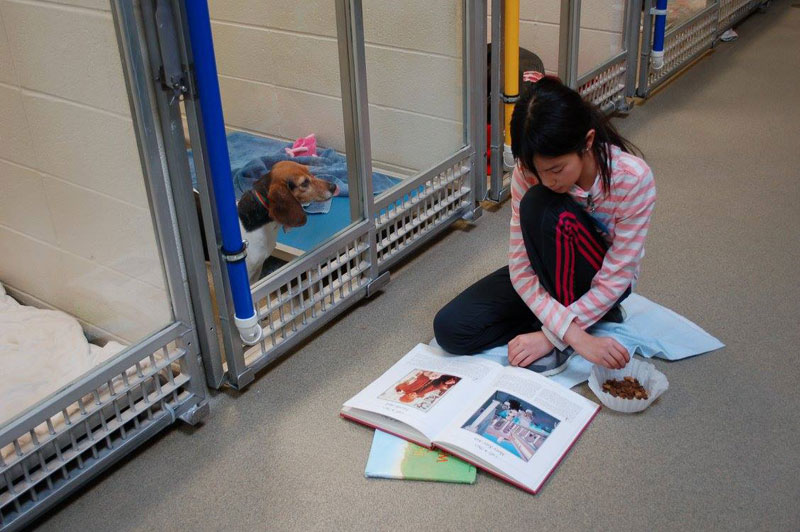 New Program Lets Kids Practice Reading While Shy Shelter Dogs Learn to Socialize (4)