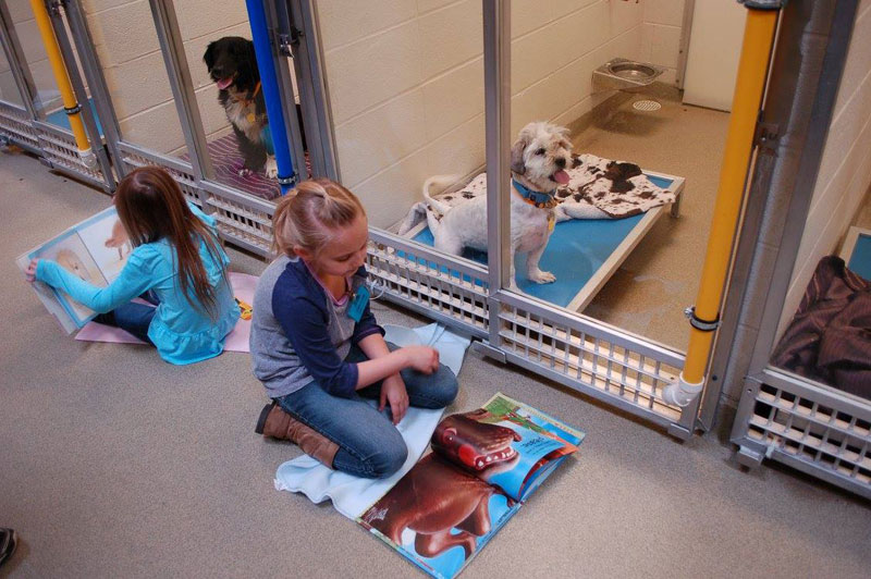 New Program Lets Kids Practice Reading While Shy Shelter Dogs Learn to Socialize (5)