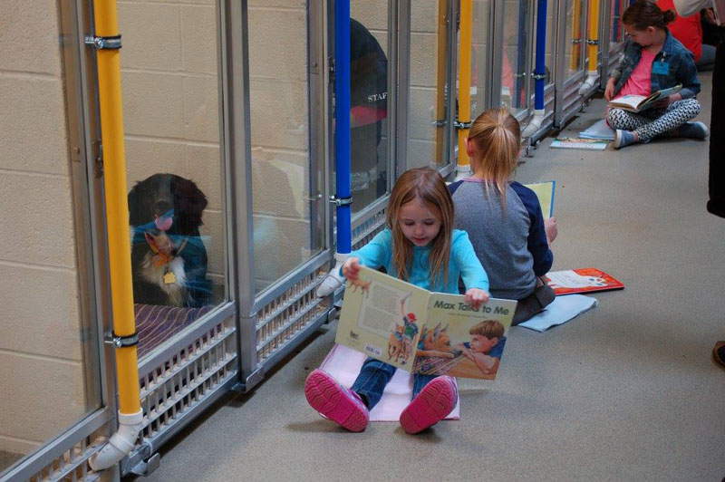New Program Lets Kids Practice Reading While Shy Shelter Dogs Learn to Socialize (6)