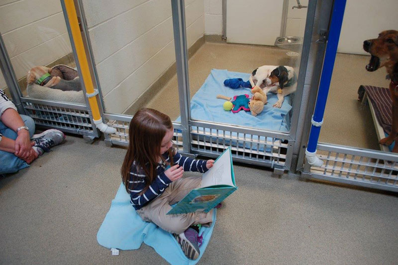 New Program Lets Kids Practice Reading While Shy Shelter Dogs Learn to Socialize (9)