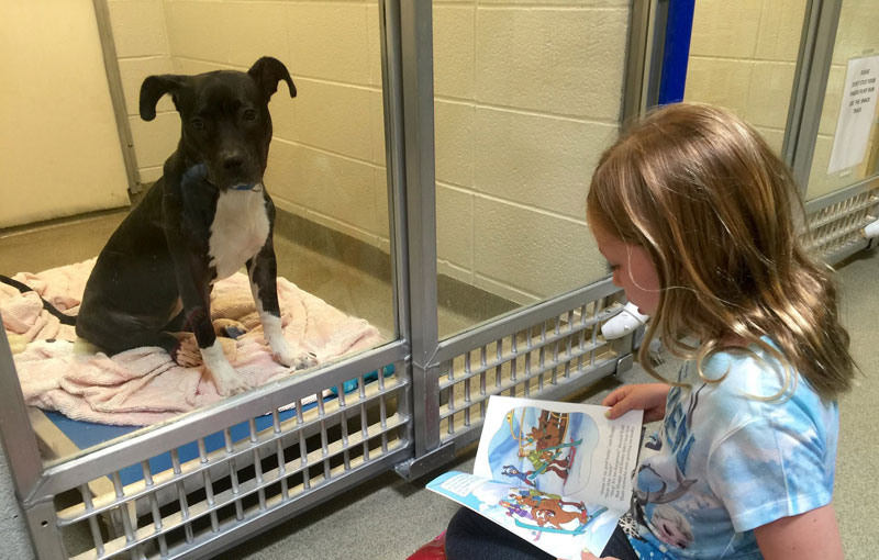 New Program Lets Kids Practice Reading While Shy Shelter Dogs Learn to Socialize