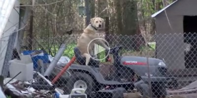 News Broadcast Gets Interrupted by Dog on Lawnmower