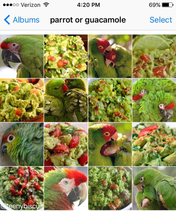 parrot or guacamole by karen zack
