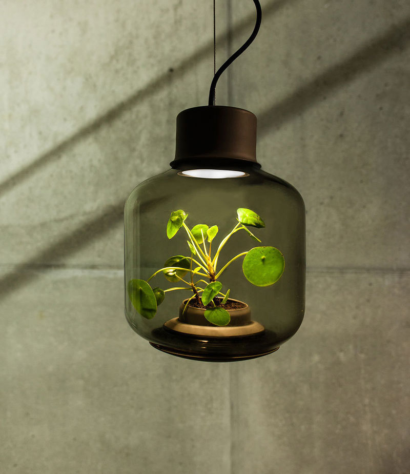 Plant Lamp Can Grow Anywhere and Requires No Human Care studio we love eames (4)