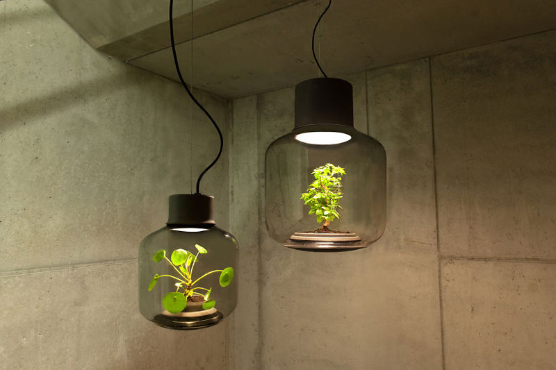 This Plant Lamp Can Grow Anywhere and Requires No Human Care