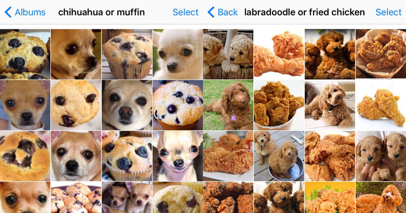 Puppy or Bagel? Chihuahua or Muffin? Shiba or Marshmallow? (8 photos)