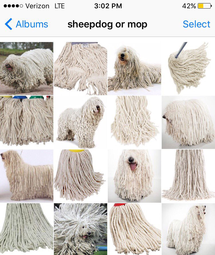 sheepdog or mop by karen zack