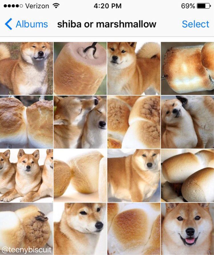 shiba or marshmallow by karen zack