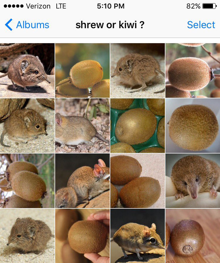 shrew or kiwi by karen zack
