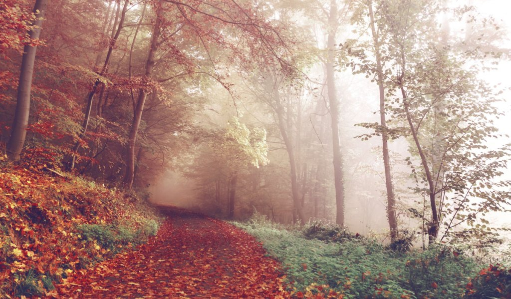 Picture of the Day: Autumn Walks in Bad Pyrmont,Germany