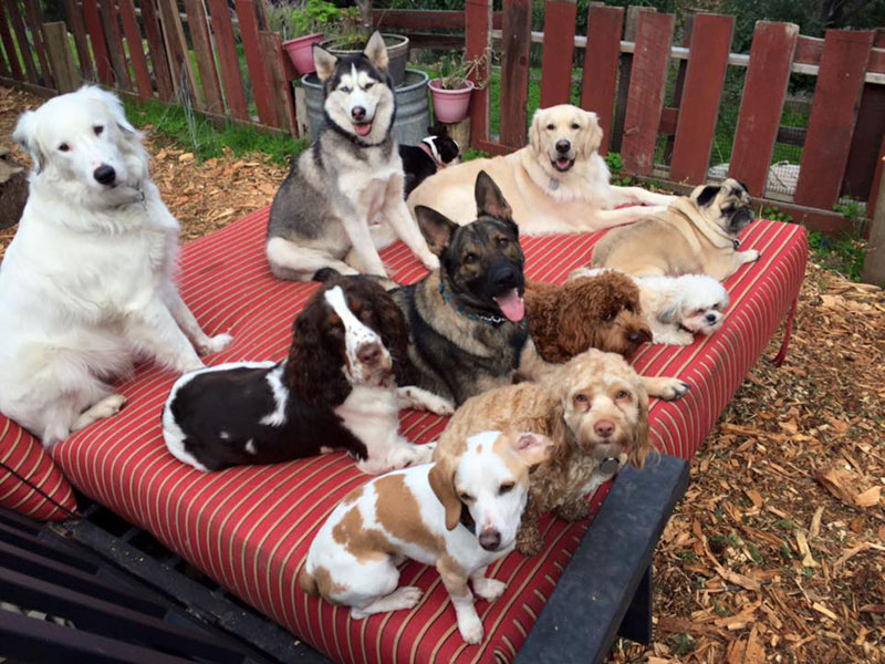 Dog Walker Takes Daily Pack Pics for the Owners by walkpro leash (13)