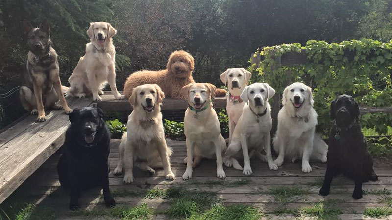 Dog Walker Takes Daily Pack Pics for the Owners by walkpro leash (14)