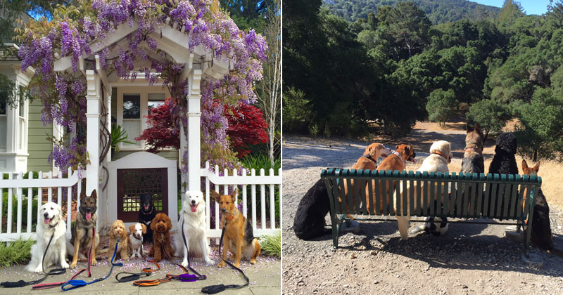 This Awesome Dog Walker Takes Daily Group Pics for the Owners