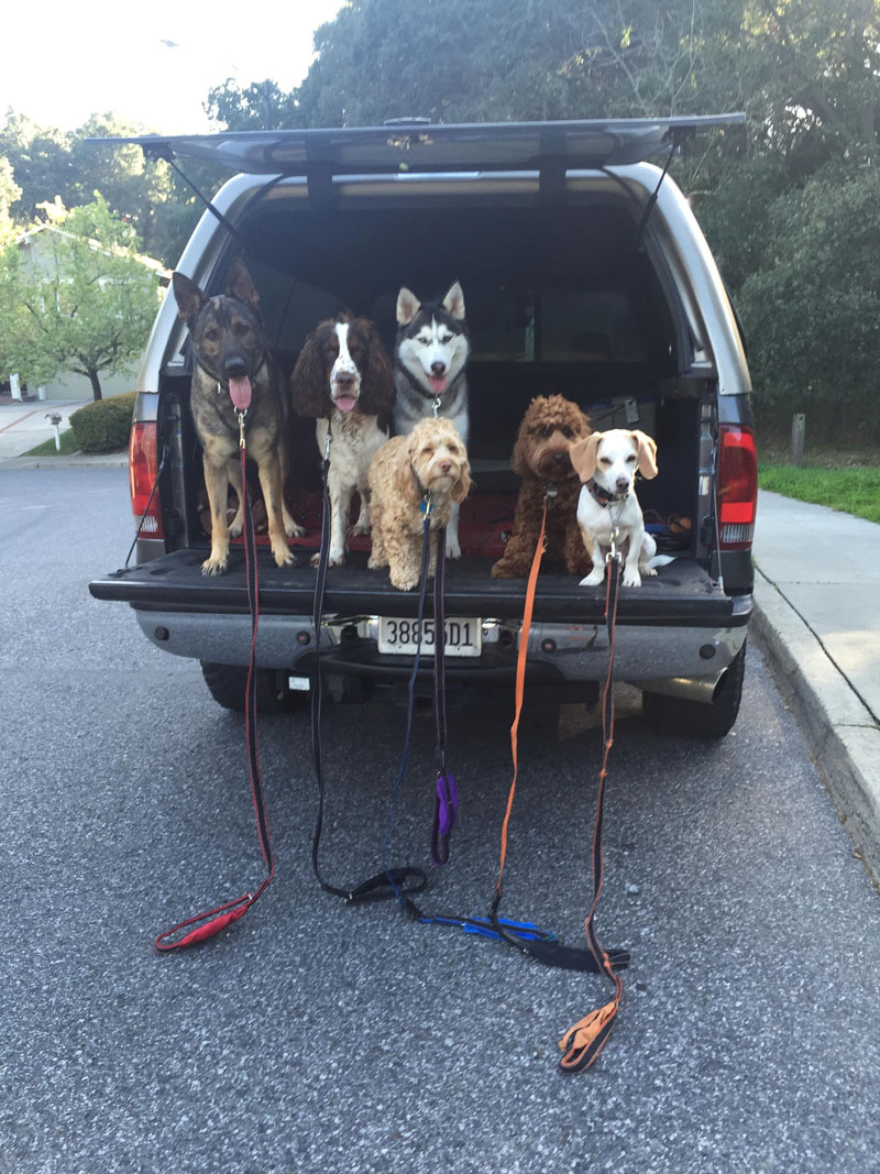 Dog Walker Takes Daily Pack Pics for the Owners by walkpro leash (4)