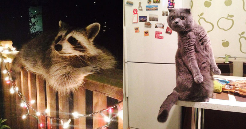 The Shirk Report – Volume 365
