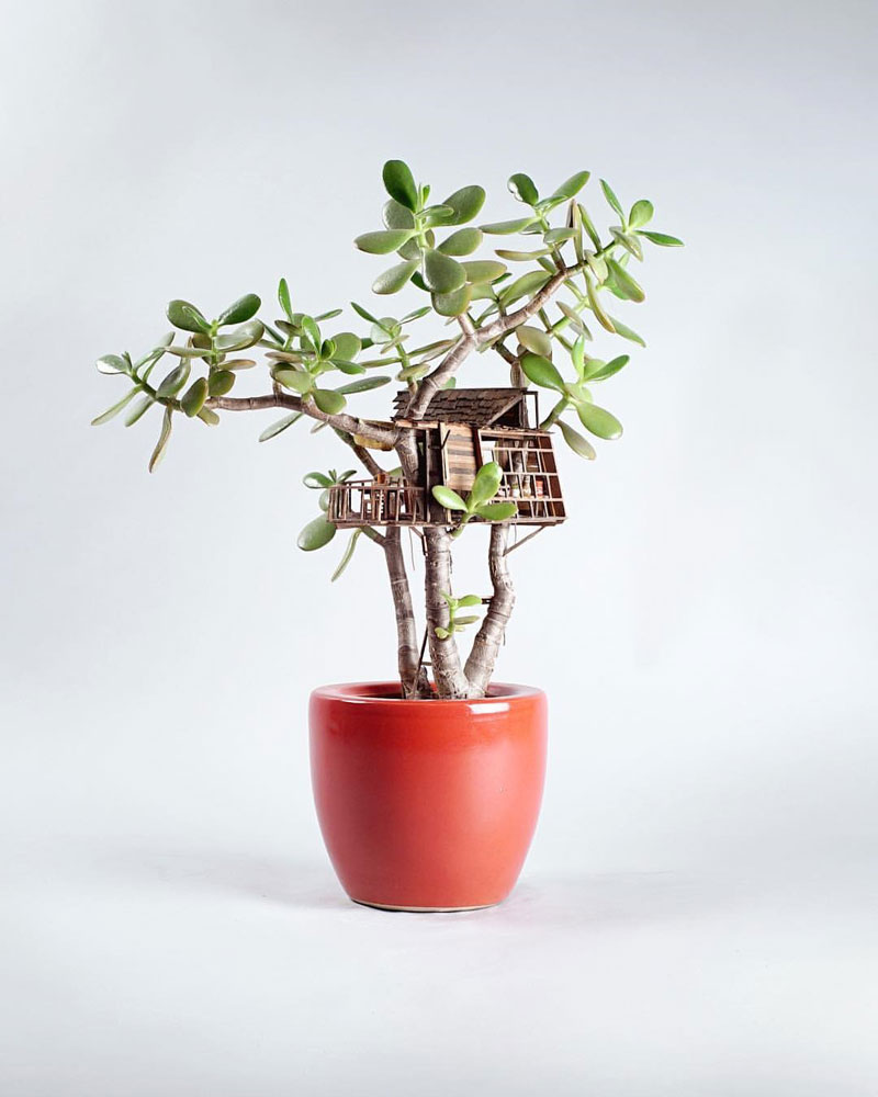 treehouses for house plants by jedediah corwyn voltz (6)