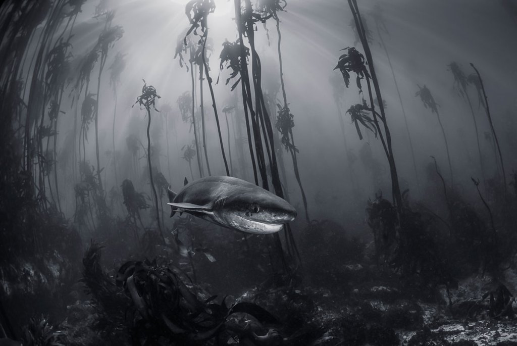 The 2016 National Geographic Travel Photographer of the Year Contest (15Photos)