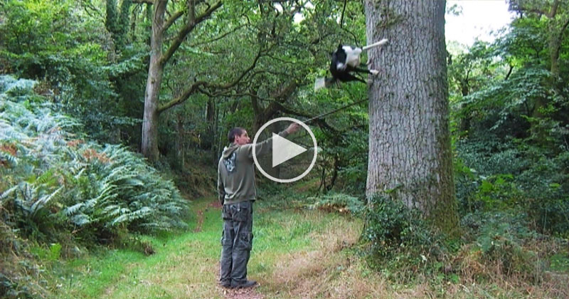 parkour-dog-neo-border-collie-video