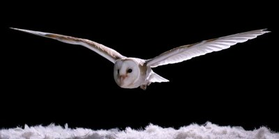 Watch How Silently Owls Fly Compared to OtherBirds
