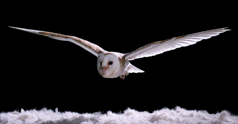 the-silent-flight-of-barn-owls-vs-other-birds