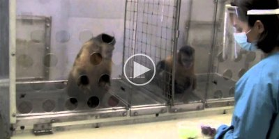 Watch What Happens When Monkeys Get Different Rewards for Doing the SameTask
