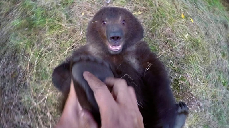 Guy Adopts Abandoned Grizzly Bear Cub and Watching them Play is Heartwarming