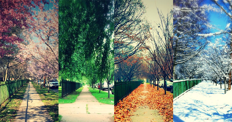 Picture of the Day: One Street, Four Seasons