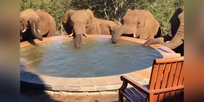 That Moment, When You Wake Up to a Herd of Elephants Drinking Out of YourPool