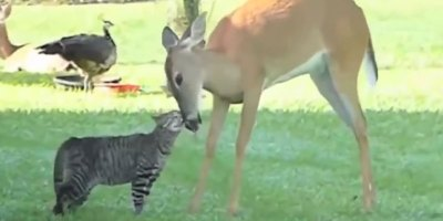 Bad Day? Enjoy this Compilation of 23 Unlikely AnimalFriendships
