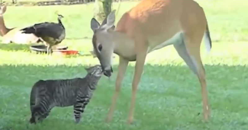 Bad Day? Enjoy this Compilation of 23 Unlikely Animal Friendships