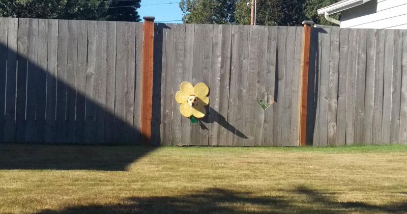 dog sticks head through fence flower