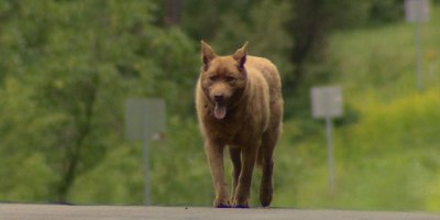 Dog Walks 4 Miles Into Town Each Day to Say Hi toEveryone