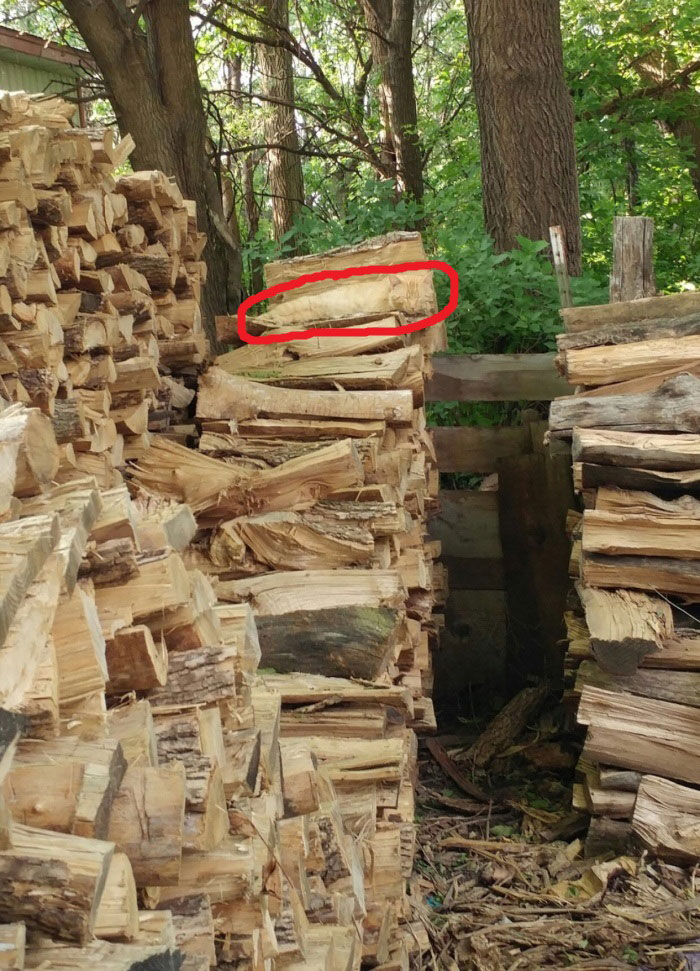 hidden cat wood pile logs (2)
