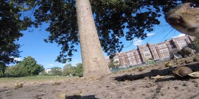 Squirrel Steals GoPro and Takes Viewers on an Intimate Journey Through theTrees