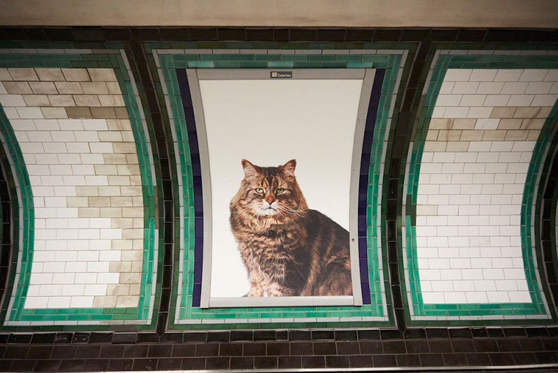 ads replaced with cats in london 2 Citizen Campaign to Replace All Ads with Cats Triumphantly Launches in London
