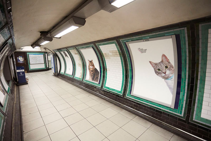 ads replaced with cats in london 3 Citizen Campaign to Replace All Ads with Cats Triumphantly Launches in London